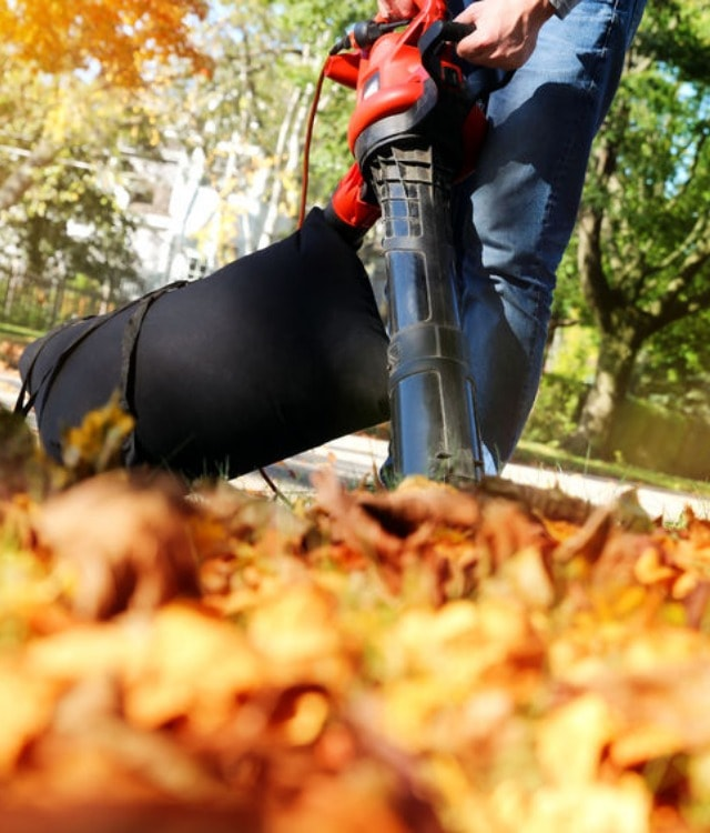 Leaf Cleanup Services in Branchburg, New Jersey