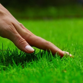Lawn Fertilization Services Hillsborough, New Jersey