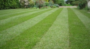 Lawn Maintenance Services in Hillsborough, New Jersey