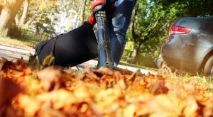 Leaf Cleanup Services Hillsborough, New Jersey