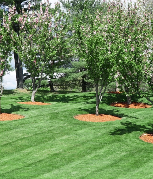 Tree Mulch Installation Services Bridgewater, New Jersey